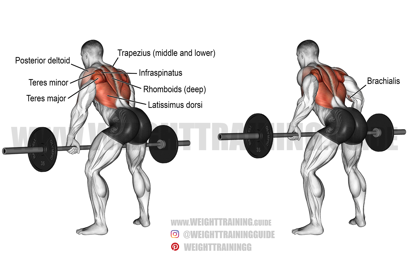Bent-over barbell row exercise