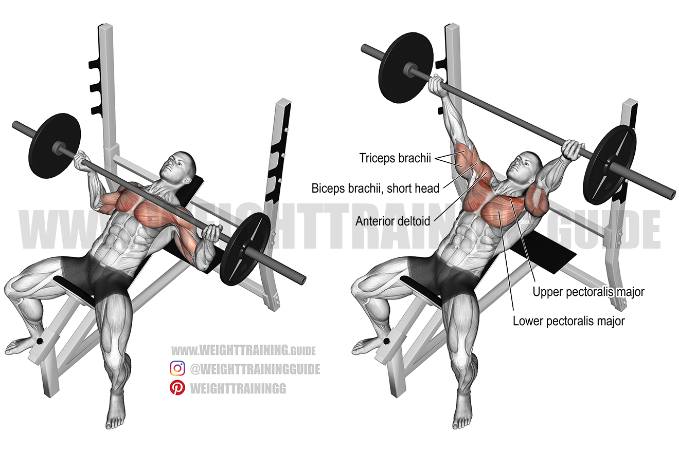 Incline Reverse Grip Barbell Bench Press Exercise Guide And Videos