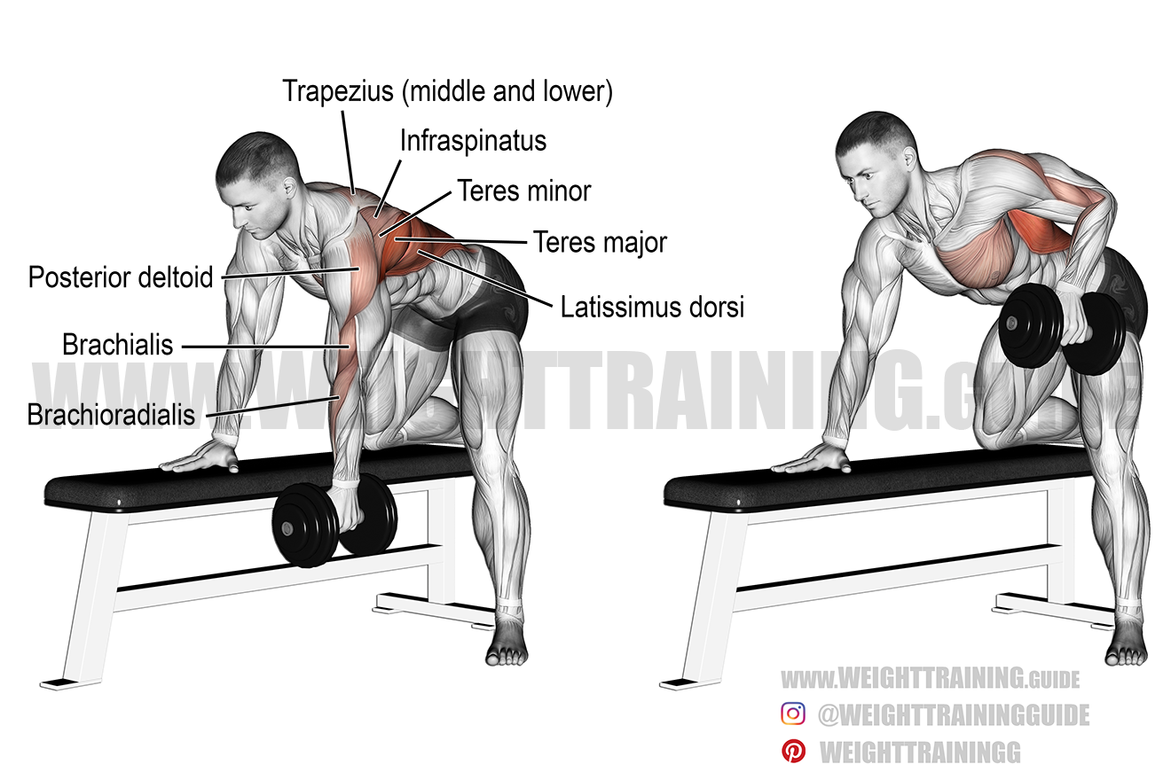 Bent-over dumbbell row exercise
