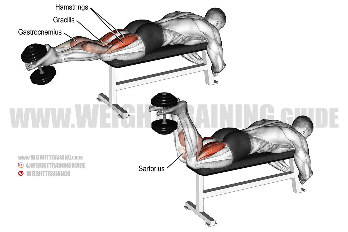 Dumbbell Leg Curl Exercise Instructions And Video Weight Training Guide