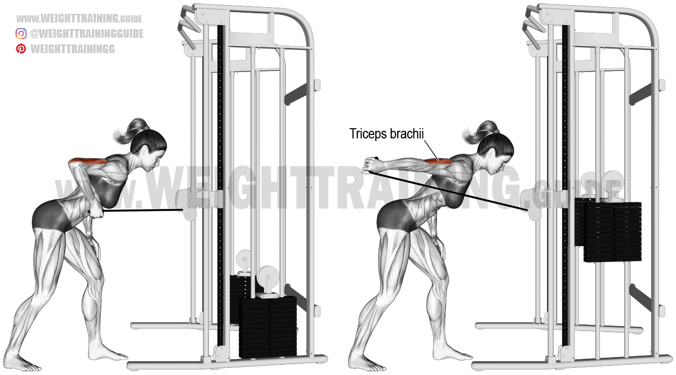 Cable Triceps Kickback Exercise Instructions And Video