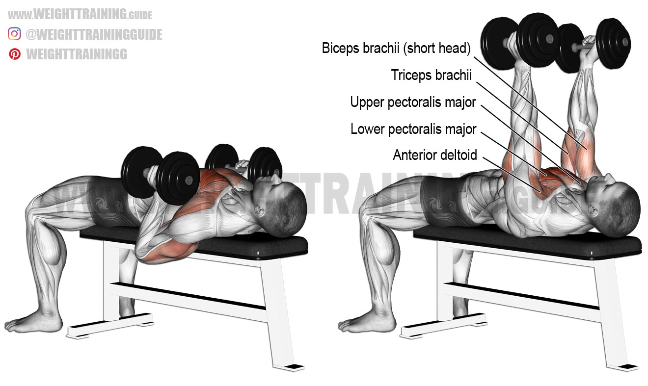 Hammer Grip Dumbbell Bench Press Exercise Instructions And
