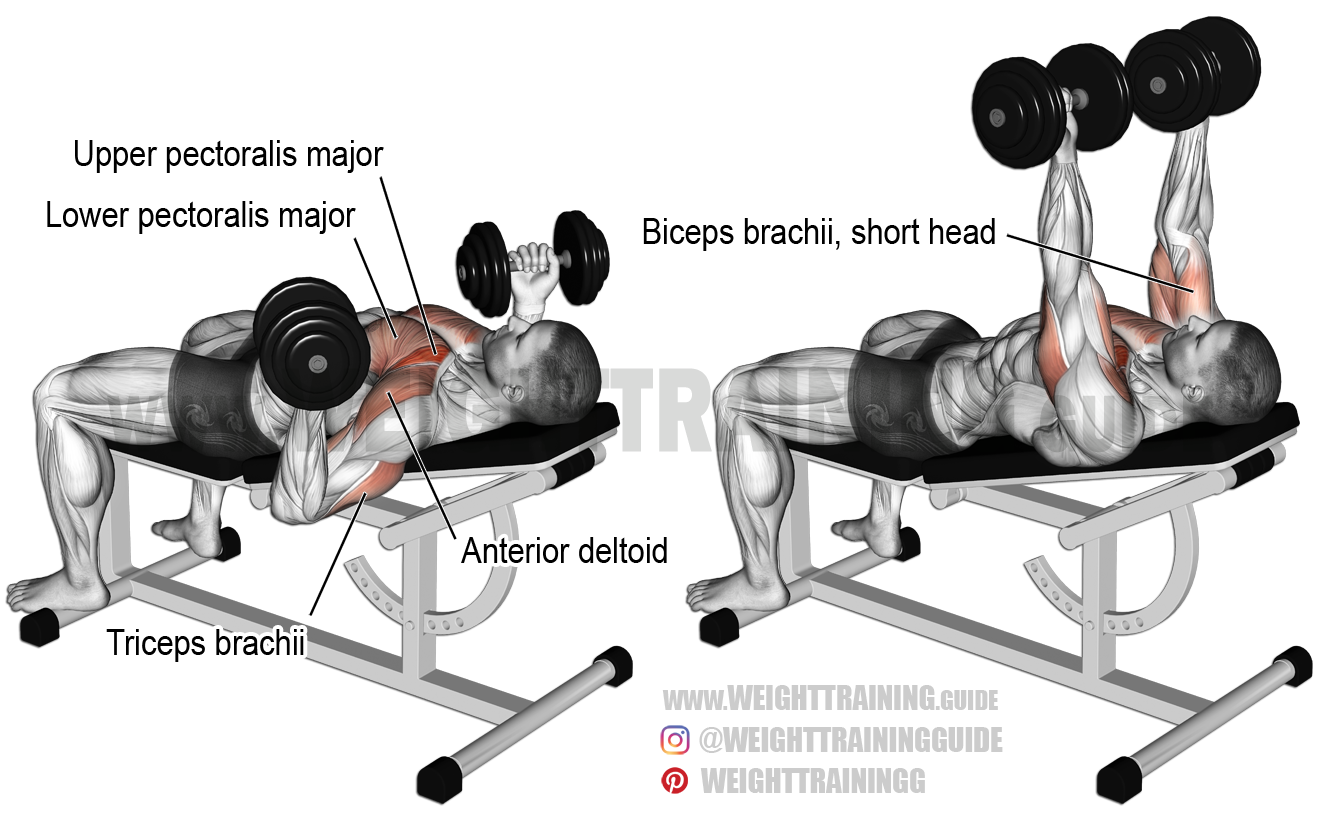 incline reverse grip dumbbell bench press exercise instructions and