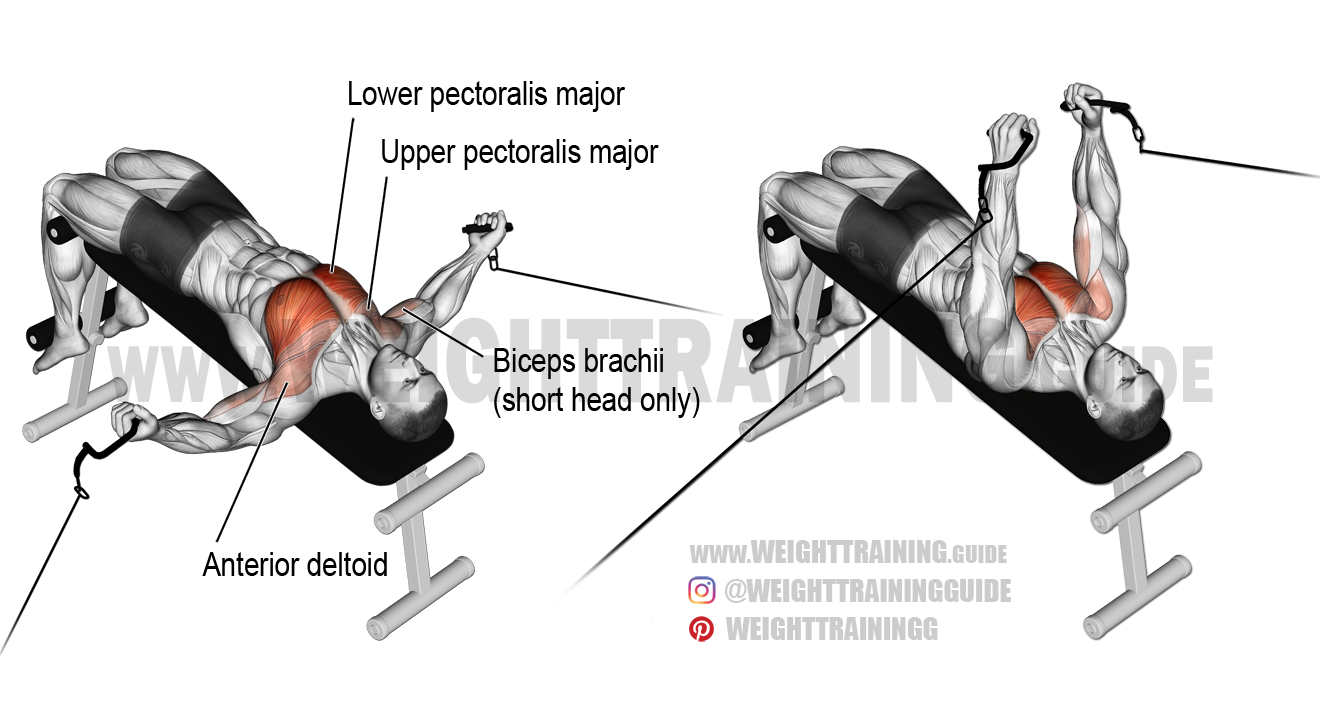 Decline Cable Fly Exercise Instructions And Video Weight