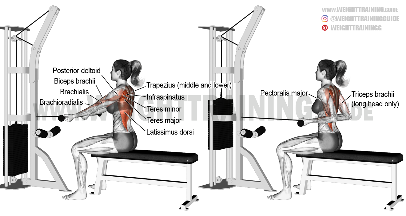 Straight-back seated underhand cable row exercise ...