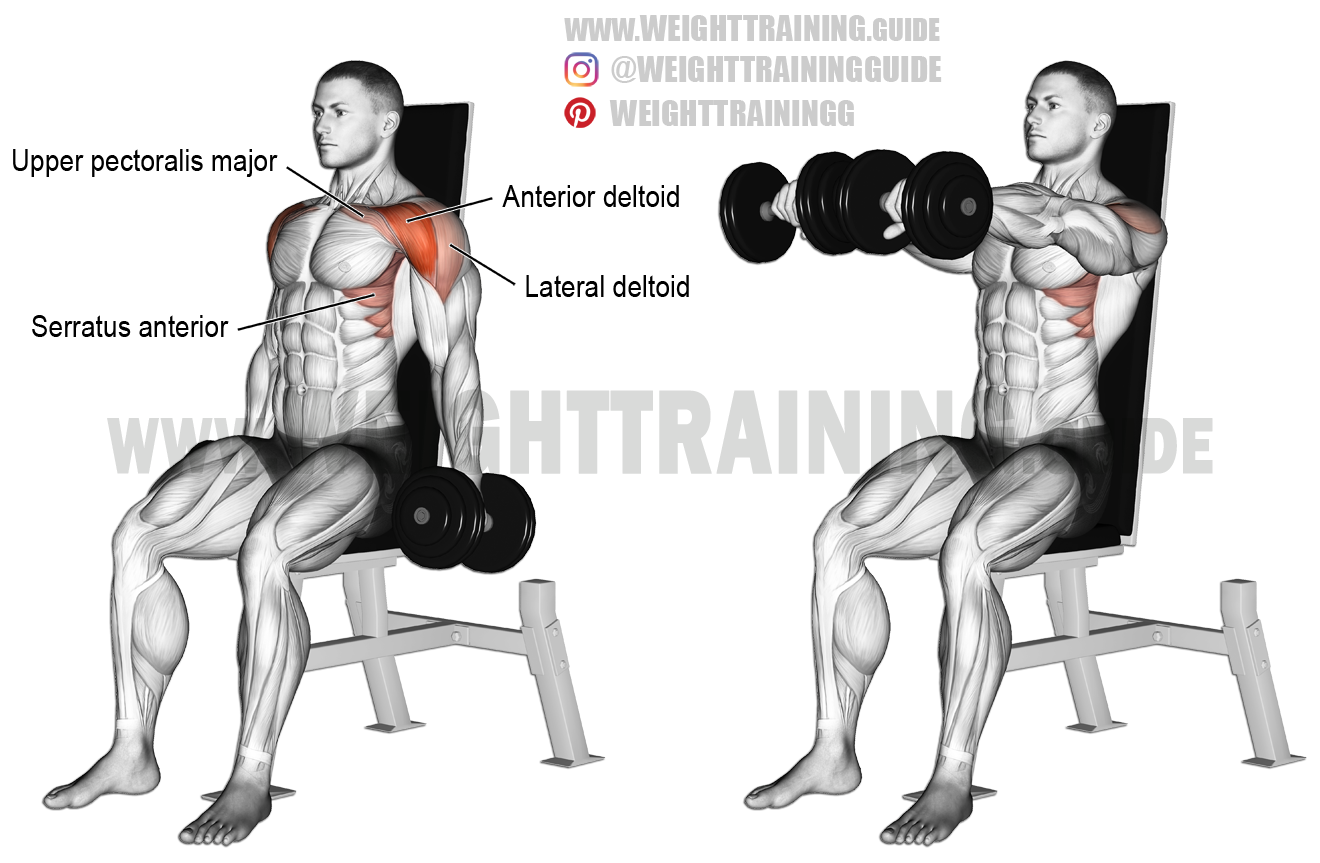 Seated Dumbbell Front Raise Exercise Instructions And Video