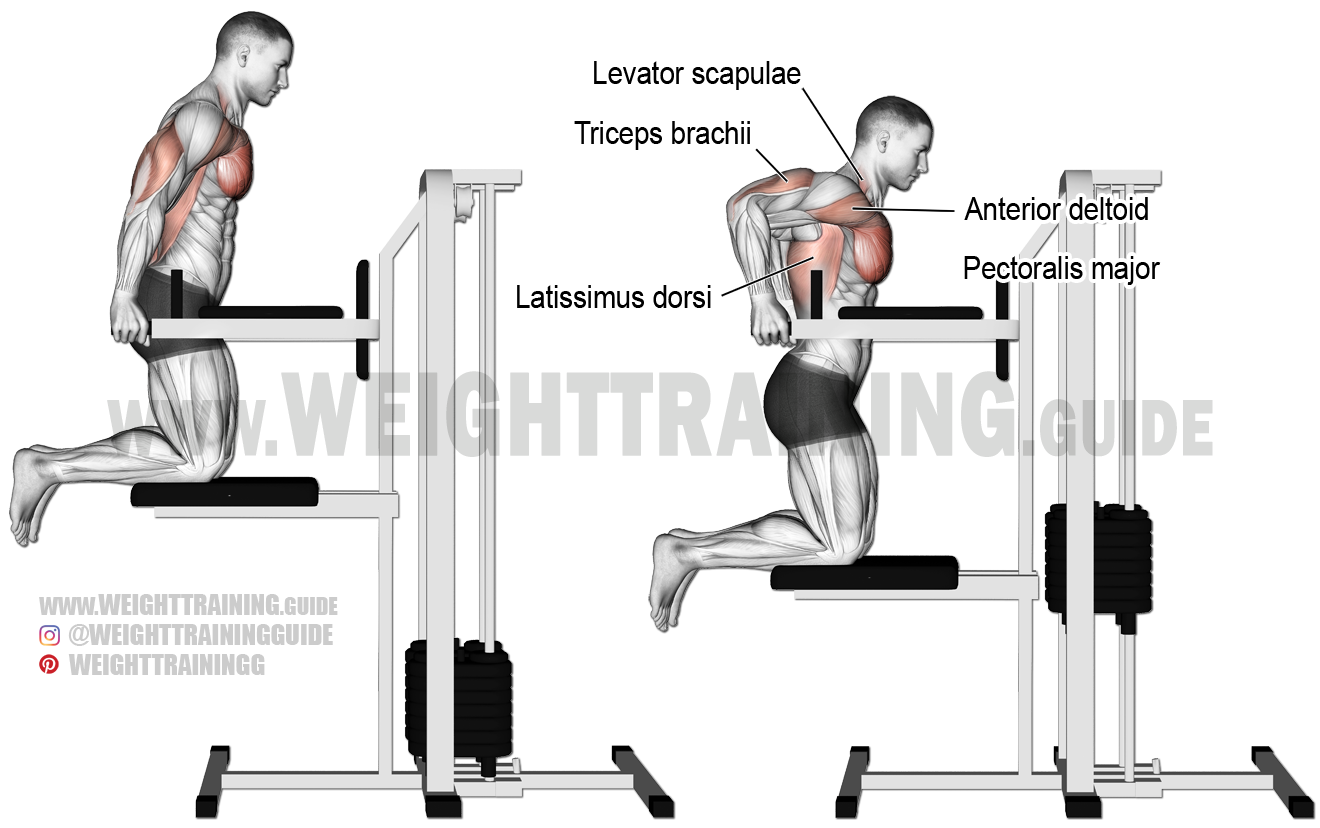 Machine-assisted triceps dip exercise instructions and video  Tricep Pulldown Vs Pushdown