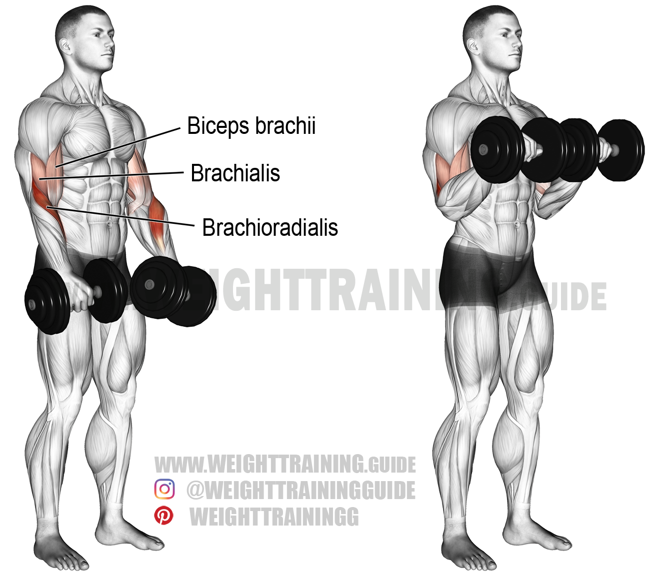 Dumbbell reverse curl instructions and video | Weight ... | 1320 x 1157 png 552kB
