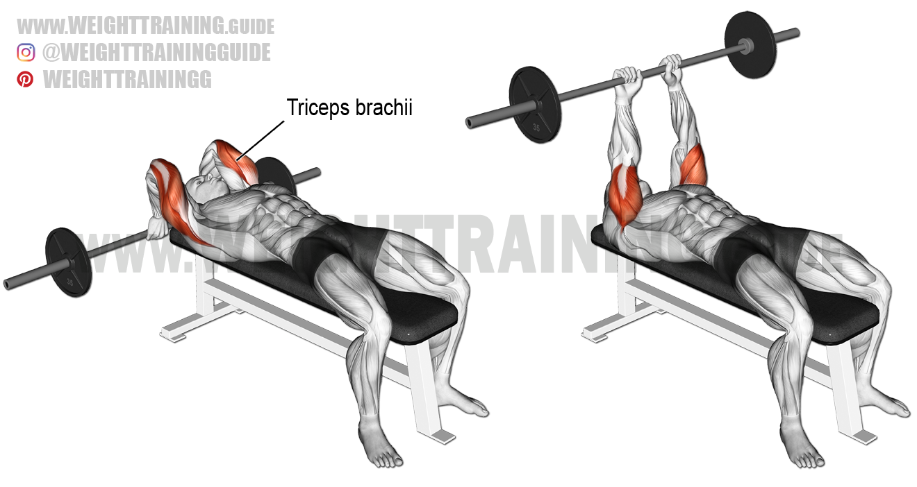 Lying Triceps Press Lying barbell triceps ...