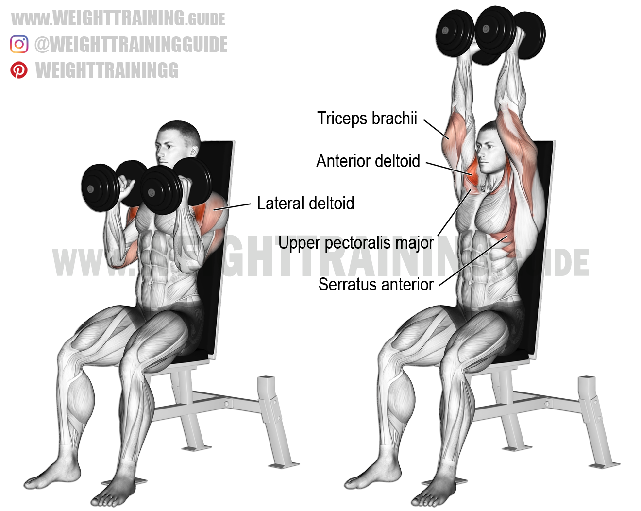 Seated neutral-grip dumbbell overhead press instructions ... Overhead Press Muscles Worked