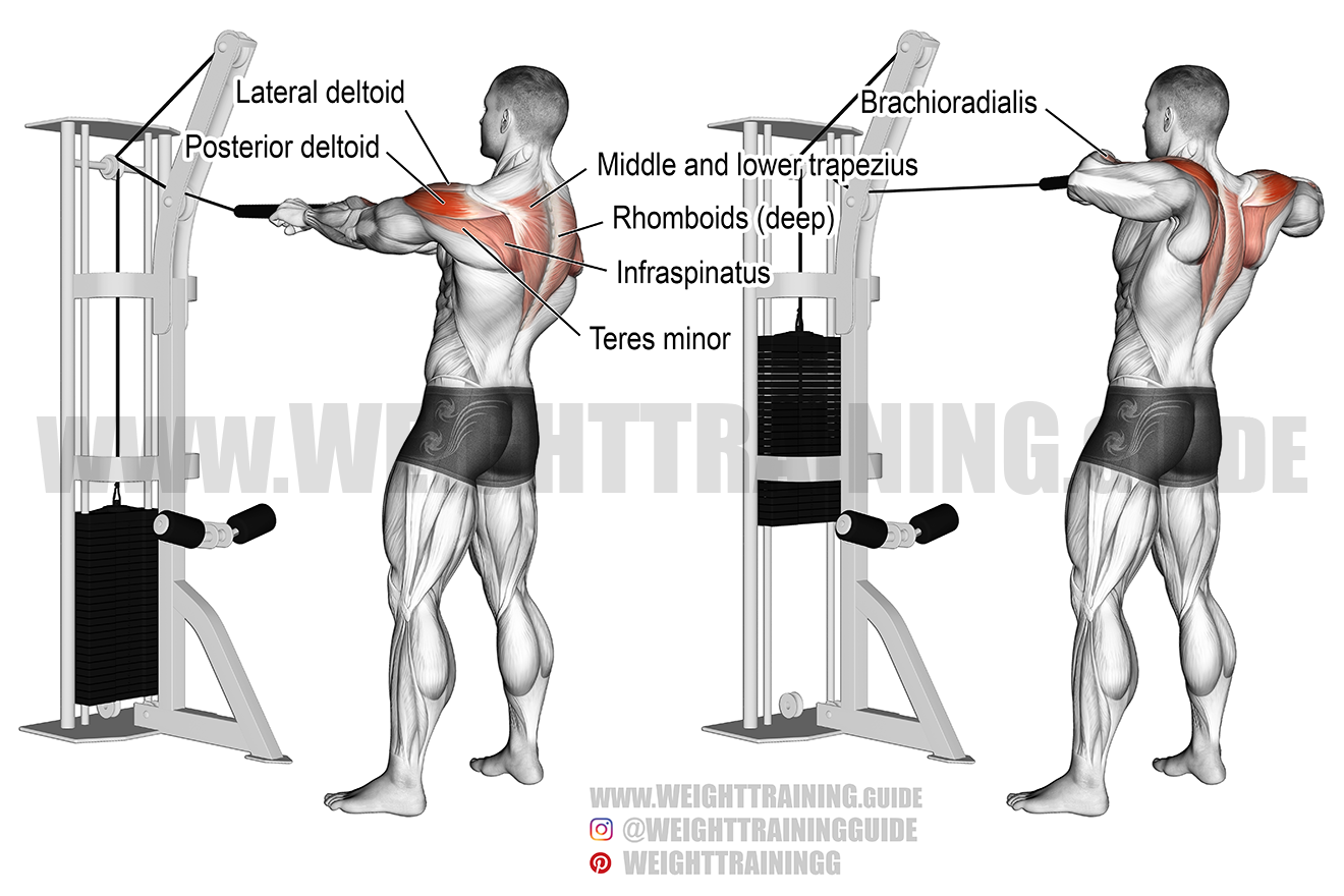 Standing cable rear delt row with rope exercise