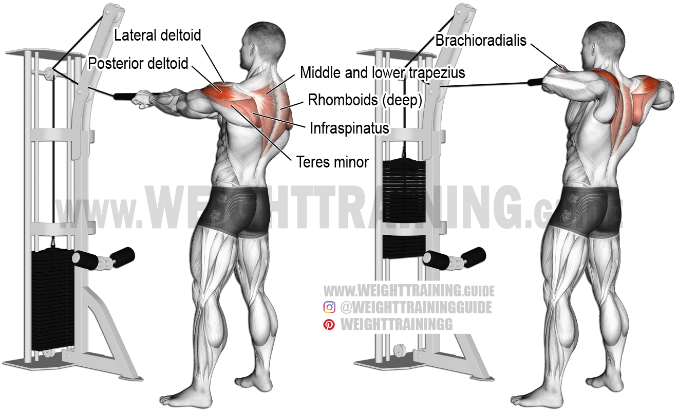 Standing Cable Rear Delt Row With Rope Instructions And Video