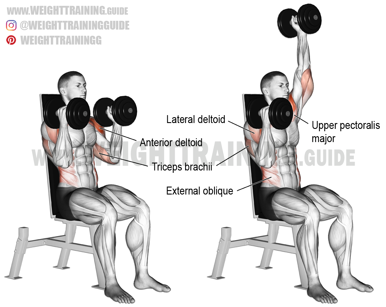 Seated Elbows In Alternating Dumbbell Overhead Press