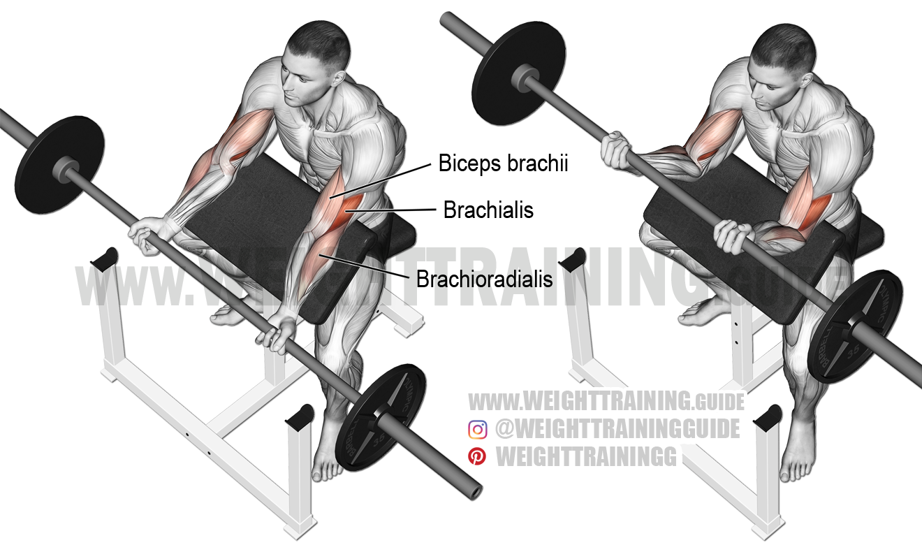 Barbell preacher curl exericse instructions and video ...  Preacher