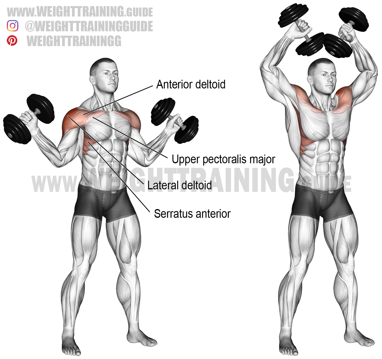 Dumbbell W Press Exercise Instructions And Video Weight