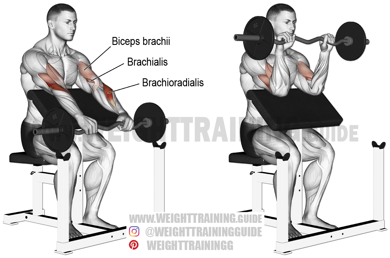 Ez Bar Reverse Preacher Curl Exercise Instructions And Video
