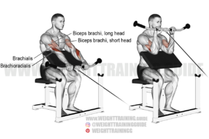 Cable reverse preacher curl exercise