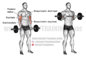 Barbell drag curl exercise