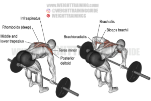 Barbell rear delt row exercise