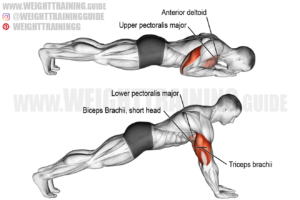 Bodyweight triceps extension exercise